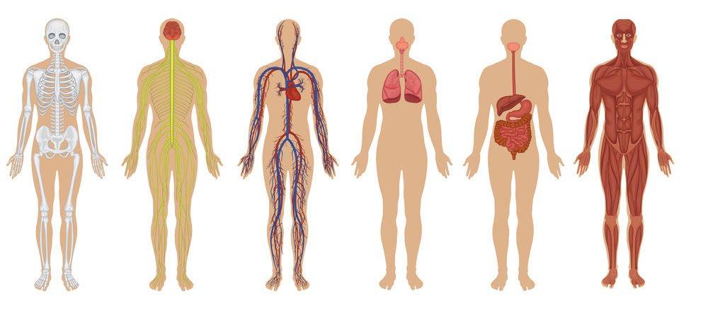 Taller Bibliolab: El cos humà, quina màquina! A càrrec de Funbrain